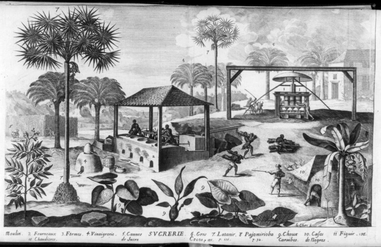 """Abbildung der Zuckerherstellung aus Jean-Baptiste Du Tetres Buch """"Histoire générale des Antilles habitées par les François"""", Band 2, Paris 1667."""