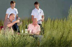 Familie Guy bei der Wermuternte im Jahr 2013. in der vorderen Reihe François und Pierre Guy (4. und 3. Generation), dahinter Pierre und Paul Guy (5. Generation).
