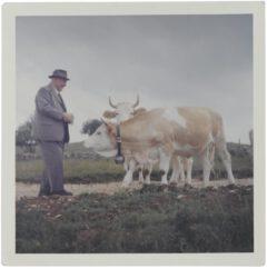 Der Urgroßvater Ernst Luginbühl-Bögli mit Kuh.