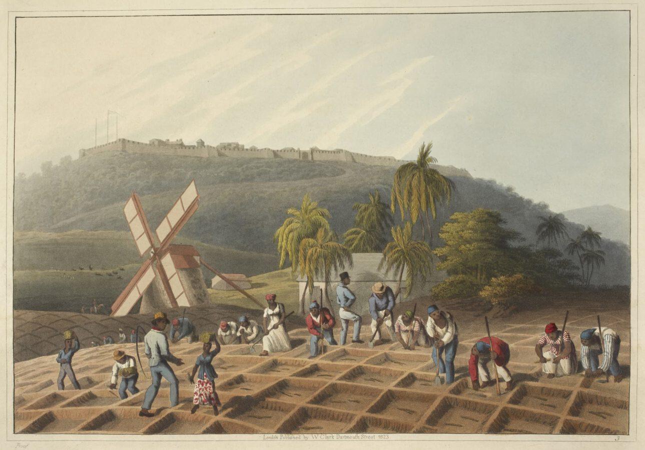 William Clark - Ten Views in the Island of Antigua (1823) - Tafel 3: Arbeitende Sklaven auf der Plantage beim Pflanzen des Zuckerrohrs.
