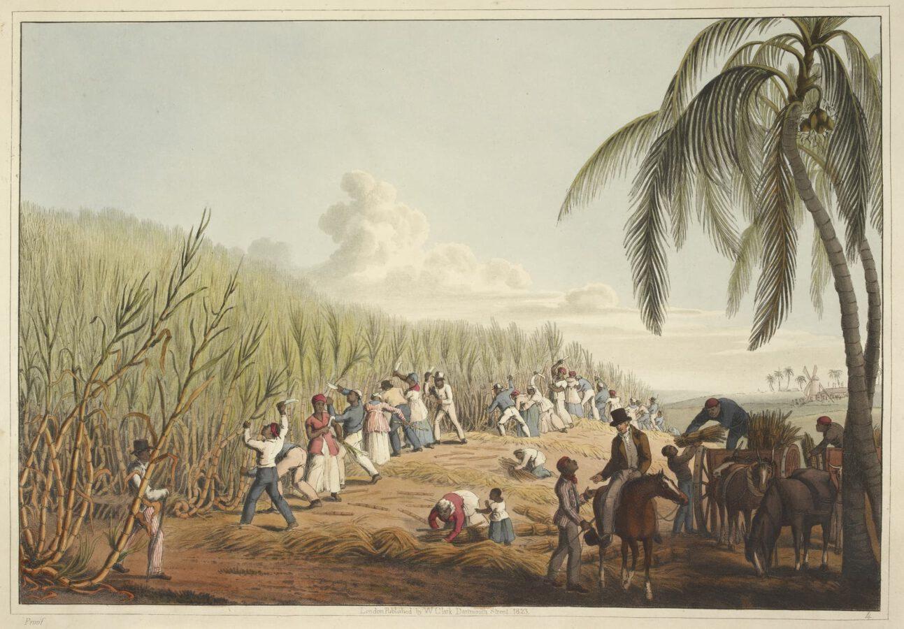 William Clark - Ten Views in the Island of Antigua (1823) - Tafel 4: Sklaven beim Schneiden des Zuckerrohrs.